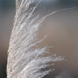 Tufts by Prentiss Findlay - Nature Up Close Leaves & Grasses ( nature, grasstufts, grassupclose, grass, marshgrass )