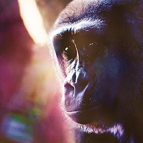The unspoken by Leigh Frudiger-Vanderland - Animals Other Mammals