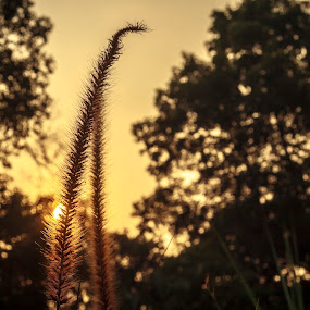 Together  by Samaneethi Krishnan - Nature Up Close Leaves & Grasses ( canon, nature, sunset,  )