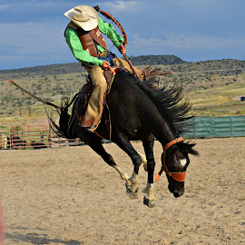 by Heather Stubbs - Sports & Fitness Rodeo/Bull Riding