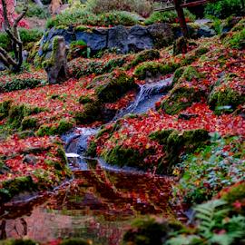 Fall Colors by Darren Sutherland - Nature Up Close Trees & Bushes ( butcharts  2014 )
