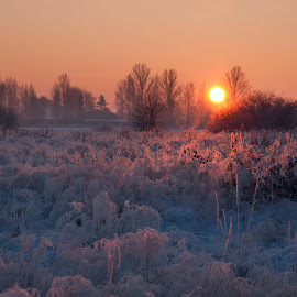 From the last winter by Eugenijus Rauduve - Landscapes Prairies, Meadows & Fields ( field, cold, frost, sun )