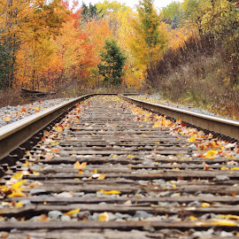 Around the Bend  by Dan Hinde - Transportation Railway Tracks ( fall colors train tracks sharp bend, fall, color, colorful, nature )