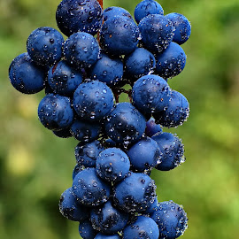 Grapes by Ad Spruijt - Nature Up Close Gardens & Produce ( grapes,  )