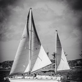 Sail by Alfonso Zacour Otero - Transportation Boats