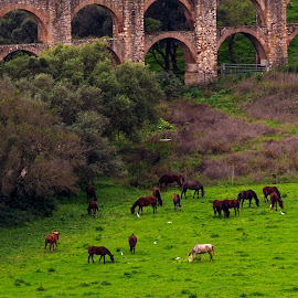 Horses in the wild nature !!! by Kishu Sing - Animals Horses ( wild, horses, lisbon, portugal, wild nature )