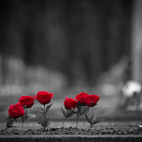 Roses by Reza Roedjito - Flowers Flower Arangements
