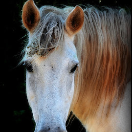 by Svjetlana Panic - Animals Horses