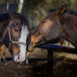 Pure nature of love & peace by Digital Kreativ  Foto - Animals Horses (  )