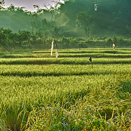 Green Indonesian  by Andy Paid - Landscapes Prairies, Meadows & Fields (  )