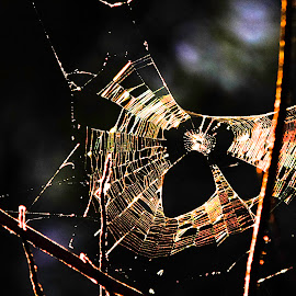 by Albert Elgert - Nature Up Close Webs