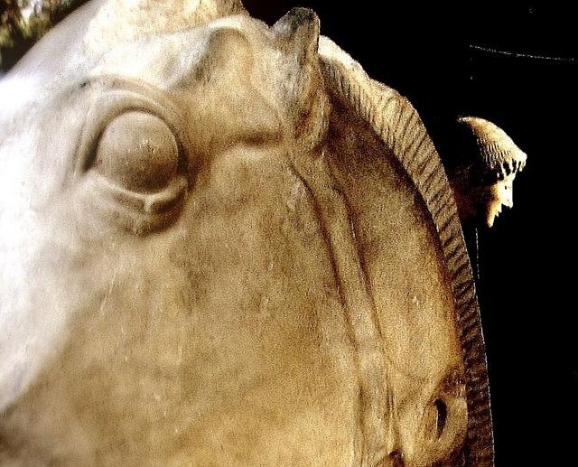 museo calcos caballo