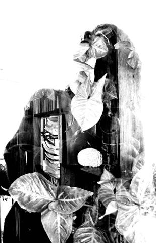 escher y arcimboldo 019