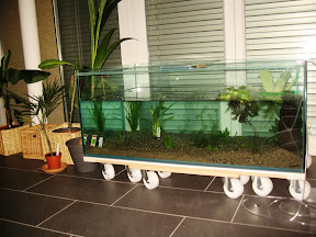 Thairiver ein etwas anderes aquarium for Wasserpflanzen ikea