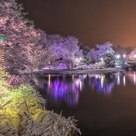 Bowring Park Winter Wonderland by Gordon Follett - City,  Street & Park  City Parks ( lights, winter, snow, christmas, pond, colorful, mood factory, vibrant, happiness, January, moods, emotions, inspiration )