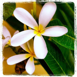 Fragrant - iPhone snapshot by Adria Bannocks - Instagram & Mobile iPhone