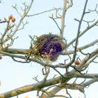 A Dove's Nest