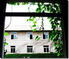 长满爬山虎的窗台