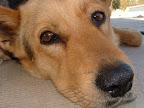 Fotos Gratis Animales - Perros