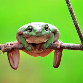 look me by Sandi Nopri yanto - Animals Amphibians