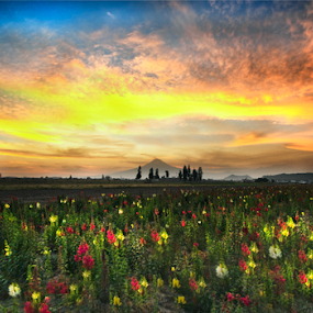 Flowersfield and sunshine by Cristobal Garciaferro Rubio - Landscapes Prairies, Meadows & Fields