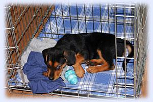köpeklerde kafes eğitimi