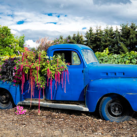 Blue Ford Truck by Chris Bartell - Transportation Automobiles ( old, truck, blue, flowers, ford )