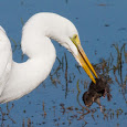 Wildlife of the West Coast Marshlands