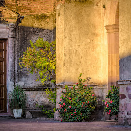 Side door Entry by Gary Hanson - City,  Street & Park  Historic Districts ( morning sun, mx, cathedral, door on side, culiacan, courtyard )
