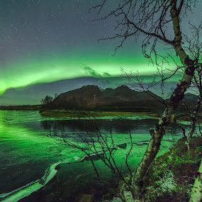 Aurora and trees by Benny Høynes - Landscapes Caves & Formations ( water, ice, northern lights, aurora borealis, forest, norway )