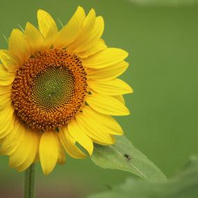 by Yeşim Demirli - Flowers Flower Gardens