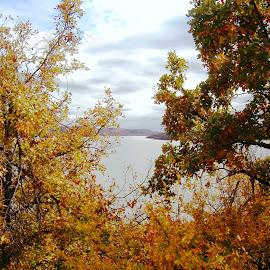 Autumn Trees by  Oklahoma Lake by Kathy Rose Willis - Nature Up Close Trees & Bushes ( nature, autumn leaves, oklahoma, autumn, vista, nature up close, trees, lake, autumn colors )