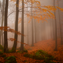 A Day of silence by Peter Samuelsson - Nature Up Close Trees & Bushes