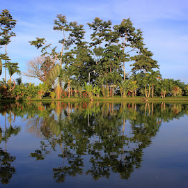 Reflejo by Erick Castro Alvarado - Landscapes Forests ( water, lago, jungla, reflection, reflejo, bosque, agua, jungle, lake, forest,  )