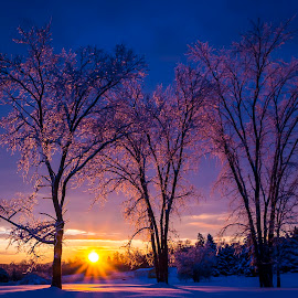 maine by J Kelley - Landscapes Sunsets & Sunrises ( strorm, winter, maine, snow, beautiful, trees, sunrise, icestorm, , HDR, Landscapes )