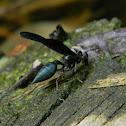 avispa - Solid Wasp