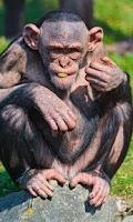 Screenshot of Talking Funny Monkey Free LWP