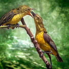 The Yellow-Bellied Sunbird by MazLoy Husada - Animals Birds