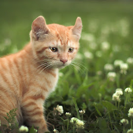 First day out by Kristin Bruner Shriver - Animals - Cats Kittens (  )