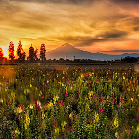 Sunshine and flowers by Cristobal Garciaferro Rubio - Landscapes Prairies, Meadows & Fields