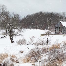 Parkman by Shelby Taylor - Landscapes Prairies, Meadows & Fields ( field, parkman, maine, greenhouse, snow )