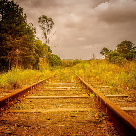 Tracks to Nowhere by Esther Visser - Landscapes Prairies, Meadows & Fields (  )