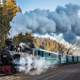 Mocănița Huțulca din Moldovița, Bucovina, ieri. by Sebastiaen  . - Transportation Trains