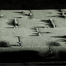 by Denise Dale - Buildings & Architecture Homes ( roof, tiles, black and white, frost, weeds,  )