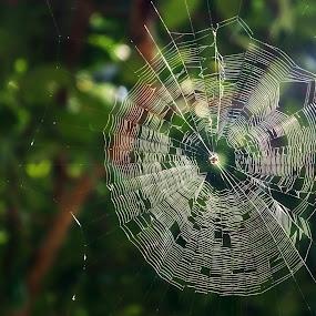 I am Spider web by Waraphorn Aphai - Nature Up Close Webs ( nature, green, nature up close, forest, photography, spider web )