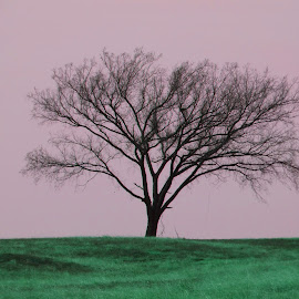 Lone tree by Nita Andrews - Nature Up Close Trees & Bushes ( tree, grass, green, lanscape, branches )
