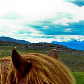 by Jónbjörg Hannesardóttir - Animals Horses