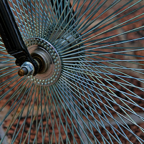 Bike wheel by Dominic Jacob - Transportation Bicycles ( bike, wheel, bikes, velo, roue,  )