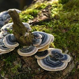 by John King - Nature Up Close Mushrooms & Fungi