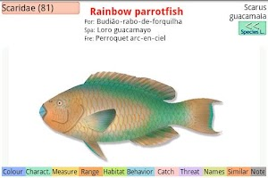 Screenshot of Marine Fishes - ID Guide